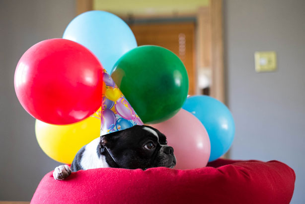 Birthday balloons with dog